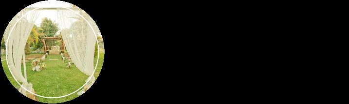 L&T_acordeon.png
