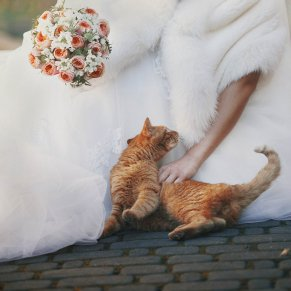 pretty bride with bouquet in hand stroked red cat outdoors